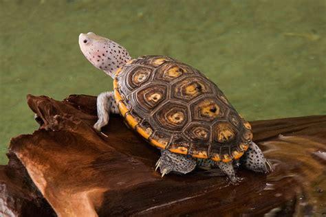 Permalink to Painted Turtle Tank – Eastern Painted Turtle Tank Setup   YouTube