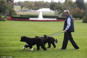 dogs in the white house obama s dogs sunny and bo get used to new home daily mail online