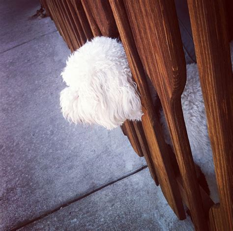puppy proofing backyard dog proof backyard tags napa s daily growl