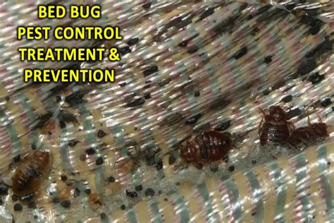Bed Bug Prevention by Bed Bug Treatment Prevention