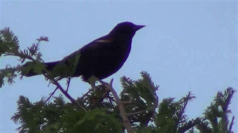 beautiful bird sounds and chirping youtube