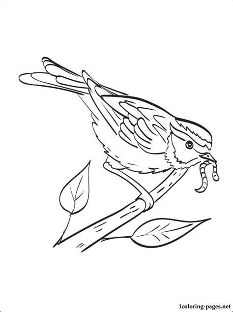 free coloring pages of sparrow
