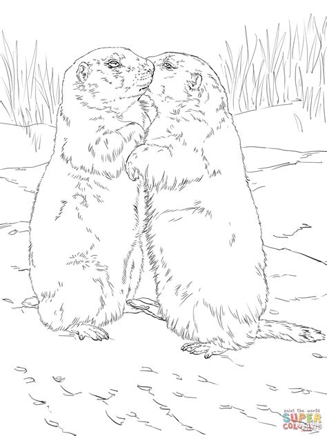 coloring pages of prairie dogs coloring pages of a prairie dog freecoloring4u com
