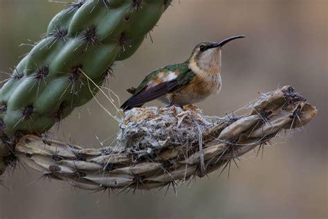 bird in everything hummingbird nesting box