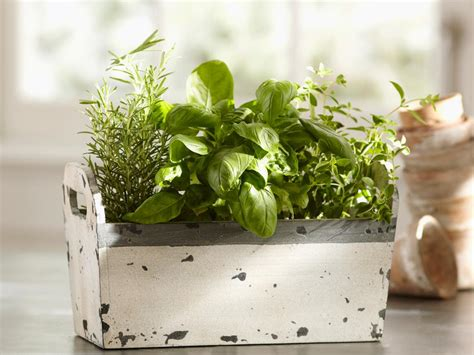 inside herb garden indoor herb garden kits to grow herbs indoors hgtv