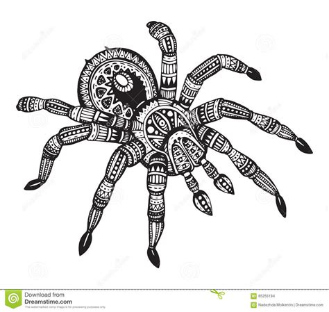 vector hand drawn ornate spider in zentangle style stock
