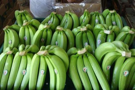 ecuador bananas canvendish origin productsspain ecuador