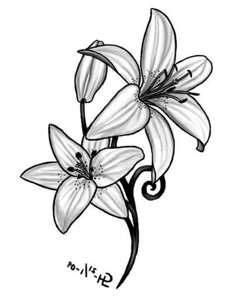 lily tattoo designs free flowers gallery flowers hd gallery