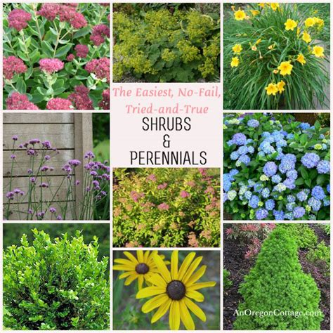 easy plants easy care shrubs perennials