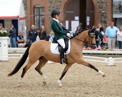 sport soundness and performance advice for dressage showjumping and event horses from chion riders equine scientists and vets books eventing show jumping and dressage riders shine at