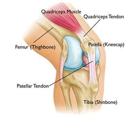 Interior Knee Ligament Adolescent Anterior Knee Pain Orthoinfo Aaos