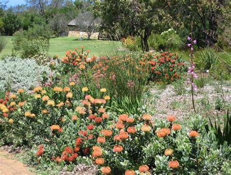 Kirstenbosch Botanical Gardens Indigenous Plants Kirstenbosch Cape Town Botanical Gardens