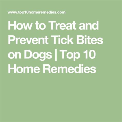 how to prevent ticks on dogs 17 best ideas about tick bite on a tick tick bite and ticks
