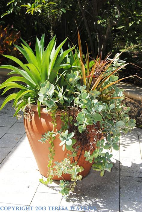 container gardens for sun pin by grace warholic on secret gardens