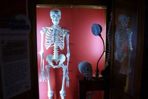 scheletro nell armadio perch 233 si dice avere uno scheletro nell armadio