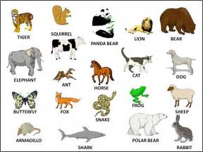learning the name of the animals