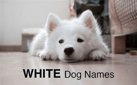 white puppy names names great ideas for naming your puppy the happy puppy site