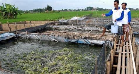 Pembesaran 6 Ikan Konsumsi Di Pekarangan Lele Belut Gurami Patin Dll 6 tahapan praktis cara budidaya ikan lele untuk pemula