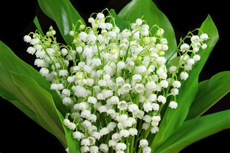 Wedding Bells In The Air Meaning by Flowers Meaning Luck