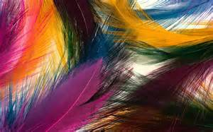 colorful feather colorful feathers wallpaper 8644