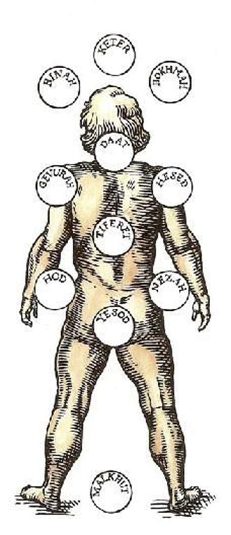 kabbalistic tree  life images tree  life