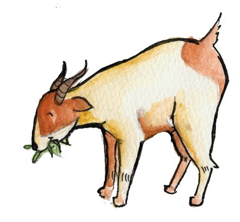 kambing wikipedia bahasa melayu ensiklopedia bebas kuda wikipedia bahasa melayu ensiklopedia bebas kambing