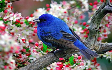 blue bird wallpaper 1920x1200 11882