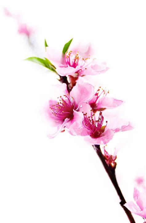 bouquet fiori di pesco bouquet sposa un segno di stile e raffinatezza