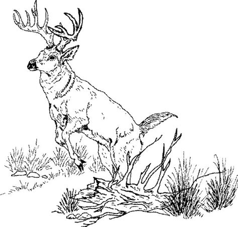 deer fighting coloring pages artwork and text