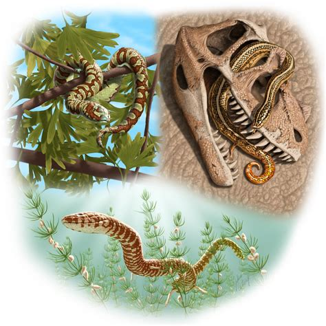 Snake Rolling In the world s oldest known snake fossils rolling back the