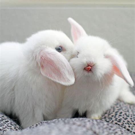 gambar foto metode awal memelihara kelinci lucu okdogi