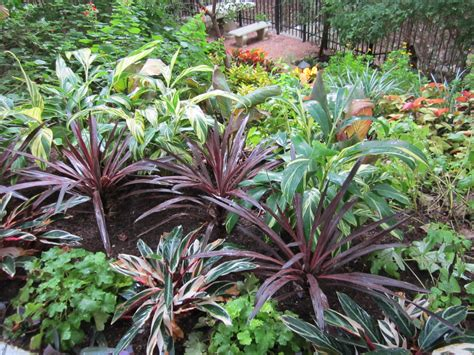 shade plants for central texas lisa s landscape design