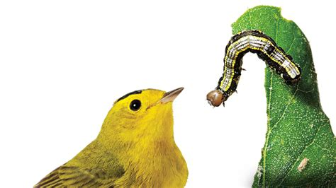 how to create a bird friendly yard audubon