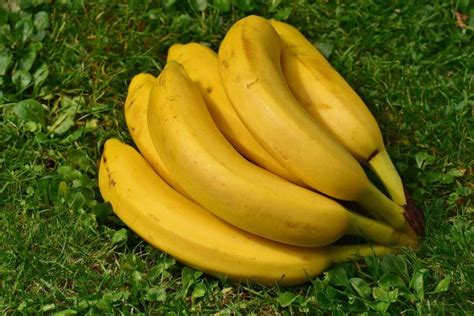 are bananas ok for dogs fruits for dogs what s and what s not for your pet 187 teacupdogdaily