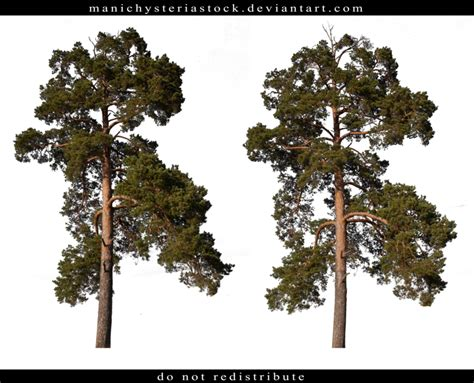 How To Make A Pine Tree Out Of Paper - pine tree cut out by manichysteriastock on deviantart