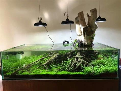 Aquascape Wood by Wabi Sabi Plantings On Aquascaping Bonsai And Aquarium