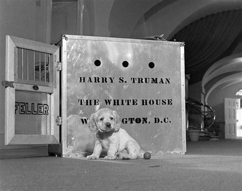 harry s dogs harry truman s feller presidential pet museum