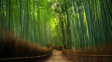 Kaos Burung Walet Background Hutan pesona hutan bambu keputih surabaya yang cantik dan instagenic