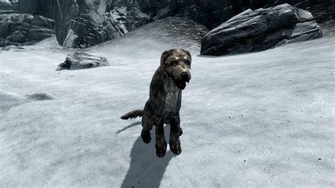 stray puppy stray the elder scrolls wiki