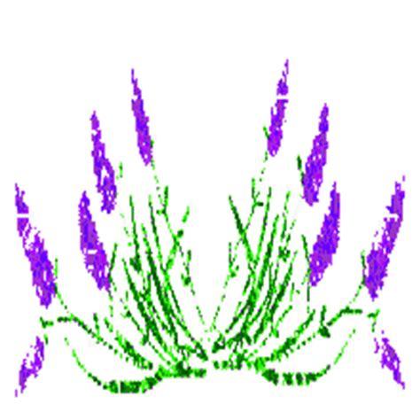 wallpaper bunga yg bergerak gambar bergerak dp bbm