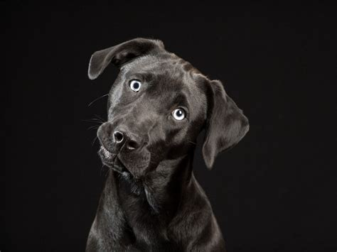 black dog the black dogs project sheds light on black dog syndrome