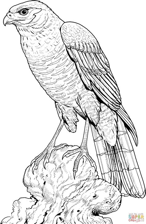 perched hawk coloring page free printable coloring pages