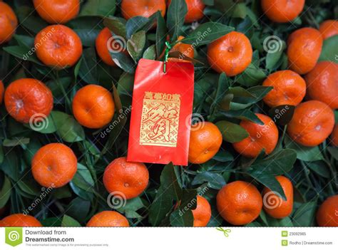 new year tangerine significance new year packet on tangerines tree stock image