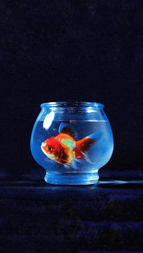 mobile wallpaper vince staples big fish theory