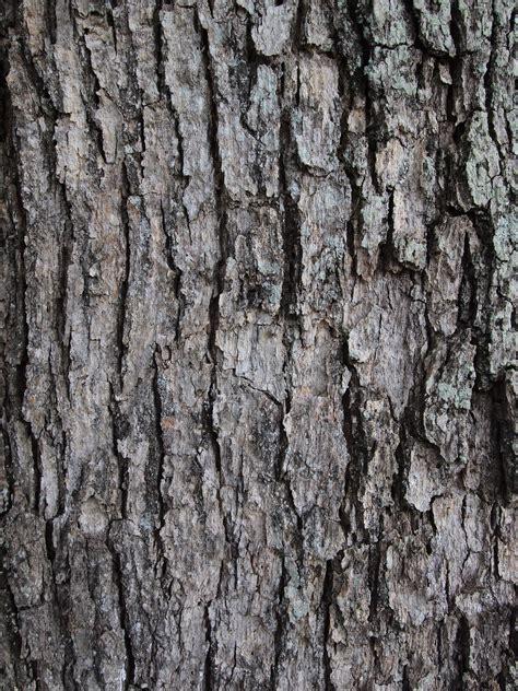 free tree bark texture i the netrender company weblog