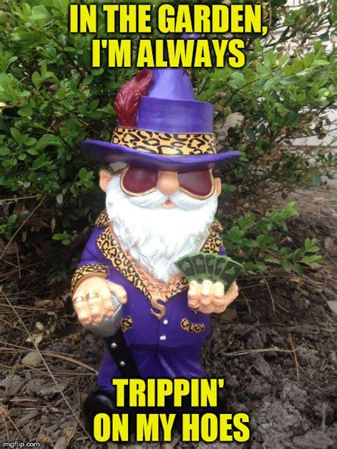 Gnome Meme - garden gnome meme garden ftempo