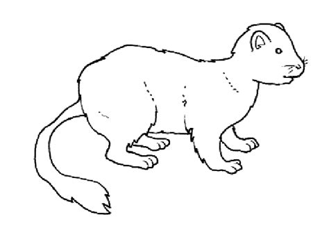 ermine coloring page animals town animals color sheet