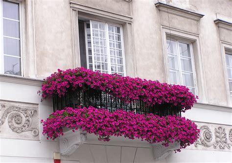 design flower balcony 5 brilliant balcony decor ideas furnituredekho