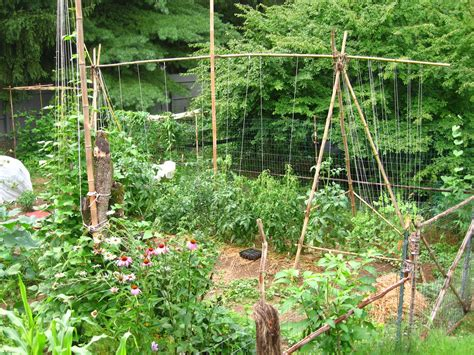 Vegetable Garden Trellis Designs Vegetable Garden Trellis Ideas Photograph Vegetable Garden