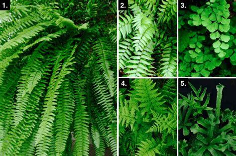 agréable Plante Pour Mur Vegetal Interieur #1: Capture-d'écran-2015-07-16-à-14.43.03.png